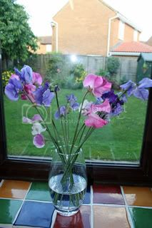 Sweet Peas