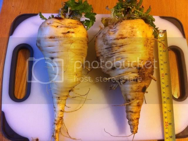 parsnips